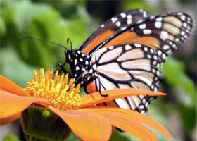 recreation-butterfly